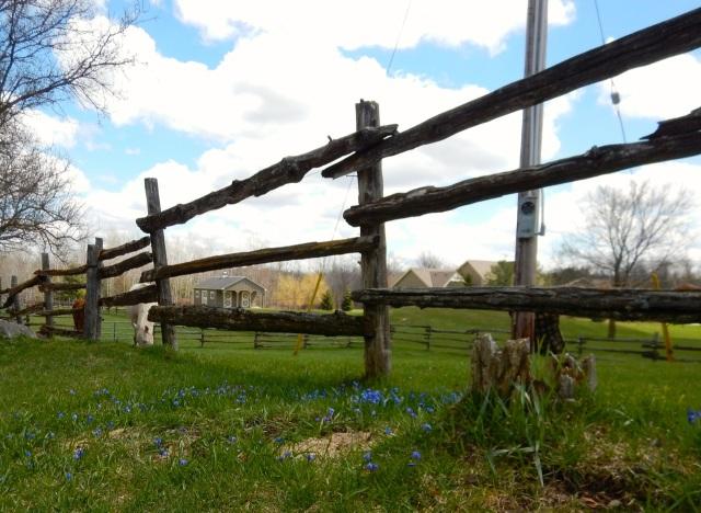 Greener pastures 2