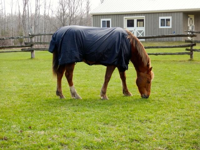 Romy kissing the grass!
