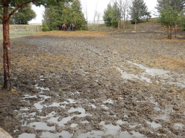 Muddy mess