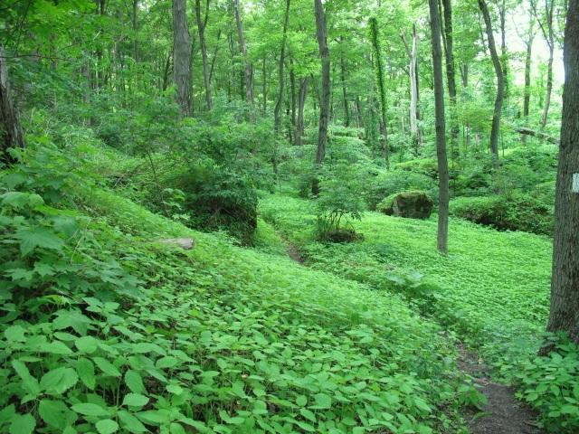 Glorious green