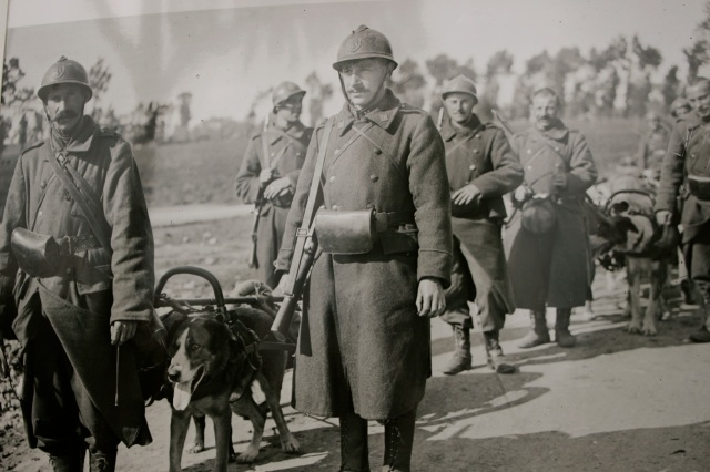 Belgian soldiers and their dog teams