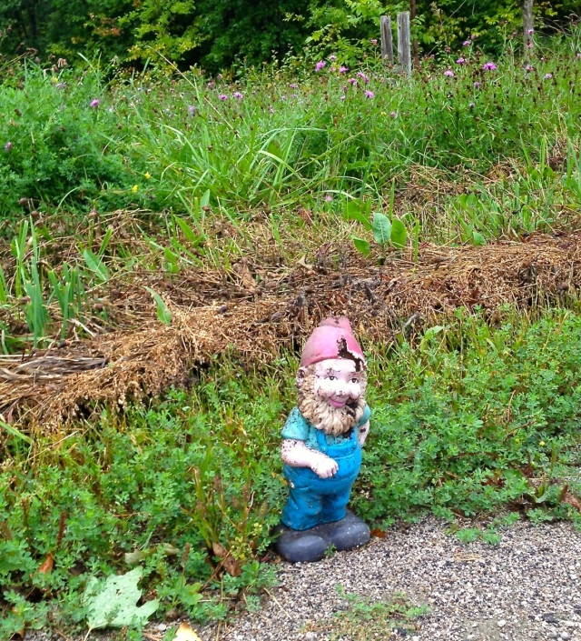 gnome with no home