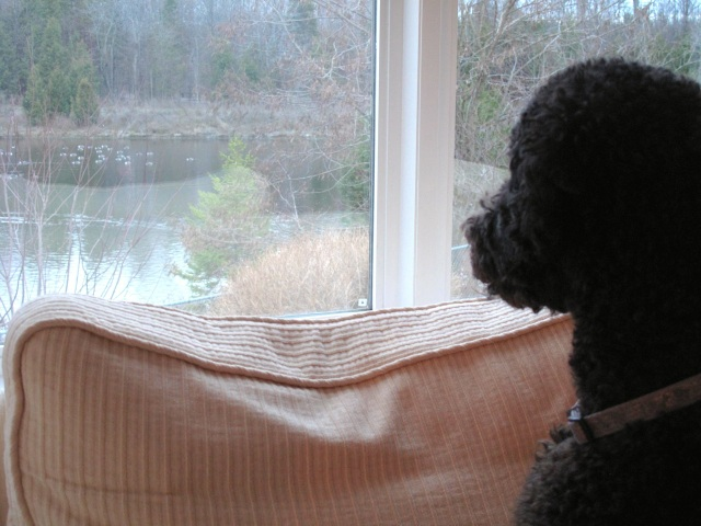 Ivy watching