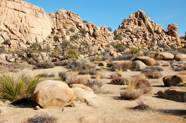 Joshua Tree view