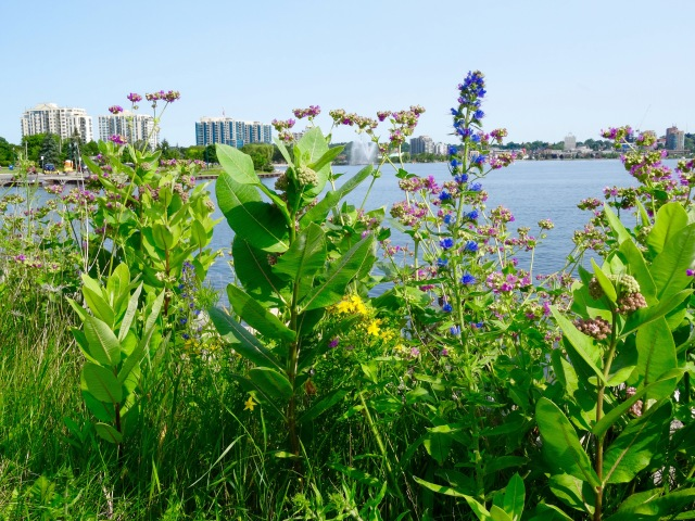Wildflowers on Kempenfelt Bay