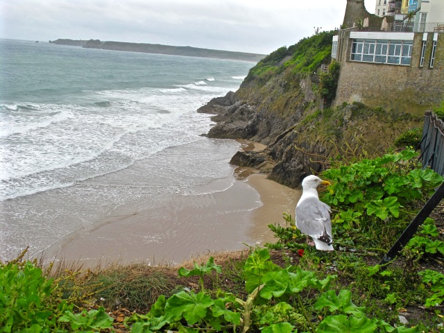 Seagull in Tenby 2